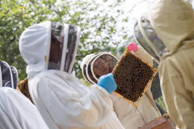Vineyard Beekeeping & Craft Honey Beer Tasting  - Sussex Image 3