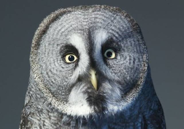 One Hour Owl Experience Kent Suitable for 14 yrs + (2-4 people) at a time Image 1
