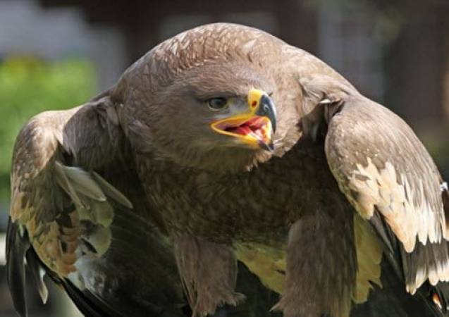 Two Hour Eagle Experience in Kent, Suitable for 8 years + Image 2