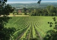 Thumbnail - Wine & Vineyard Tours in Kent The Wine Garden of England Image 0