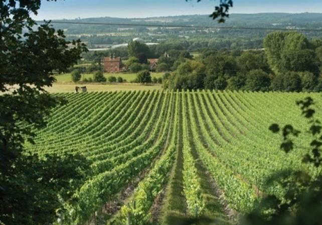 Wine & Vineyard Tours in Kent The Wine Garden of England Image 1