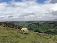 Private Tours of The Yorkshire Moors Image 2 Thumbnail