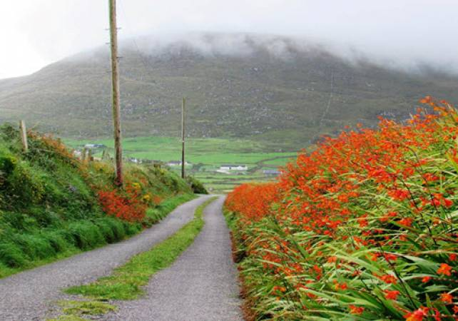 Undiscovered Ring of Kerry Tour  - Image 2