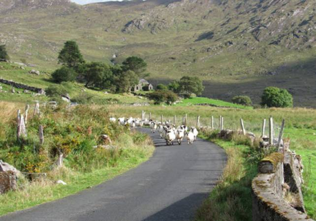 Undiscovered Ring of Kerry Tour  - Image 4