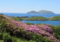 Thumbnail - Undiscovered Ring of Kerry Tour  - Image 4