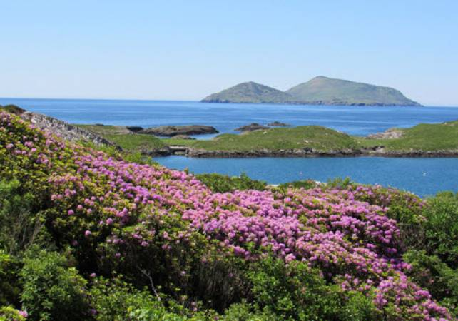 Undiscovered Ring of Kerry Tour  - Image 5