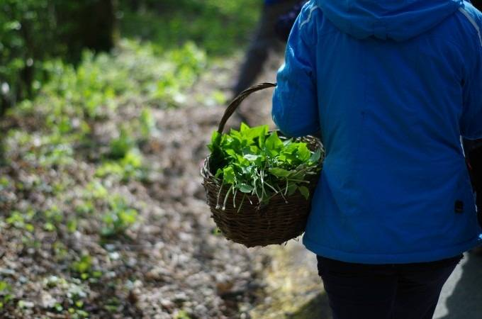 Introduction to Foraging at Various Locations in the UK Image 1