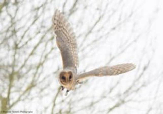 One Hour Owl Experience Kent Suitable for 14 yrs + (2-4 people) at a time Image 3