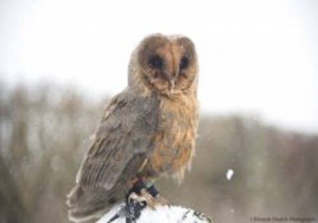 One Hour Owl Experience Kent Suitable for 14 yrs + (2-4 people) at a time Image 4