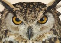 Thumbnail - One Hour Owl Experience Kent Suitable for 14 yrs + (2-4 people) at a time Image 4