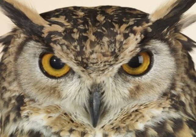 One Hour Owl Experience Kent Suitable for 14 yrs + (2-4 people) at a time Image 5