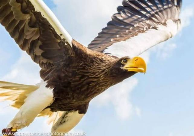 Two Hour Eagle Experience in Kent, Suitable for 8 years + Image 1