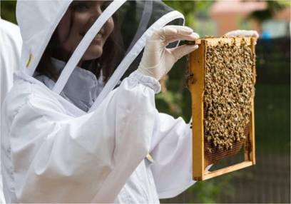 Introduction to Beekeeping and Craft Beer Tasting  -