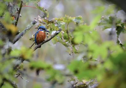 Wildlife Walk with The Bird Whisperer For One  Berkshire Image