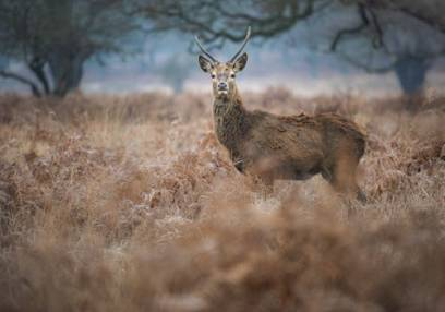 Sunset /Sunrise Photography workshop Richmond Park London Image