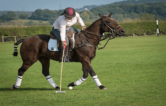 LEARN TO PLAY POLO TASTER SESSION Gallery Image