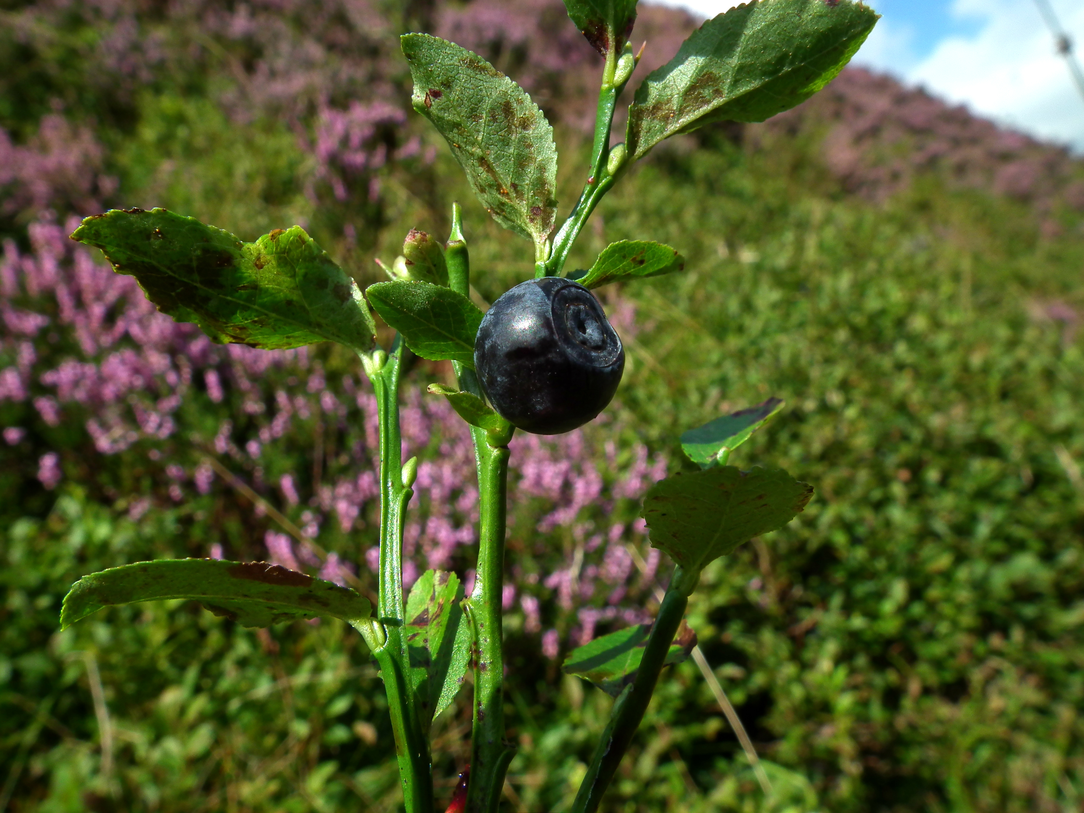 FORAGING COOKERY & LUNCH Gallery Image