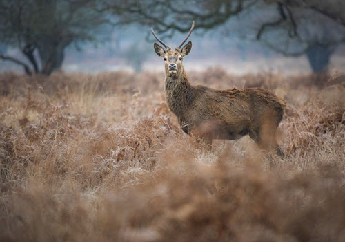 wildlife photography workshop richmond park London