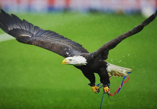Eagle experience Eagle Heights Kent