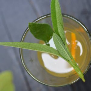herbs in a cocktail