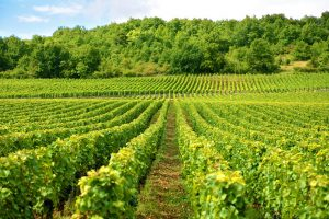 Views across countryside over a vineyard