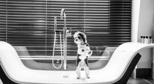Dog in a glass bath